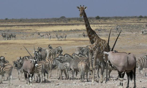 TANZANIA: I Parchi del Nord 2021