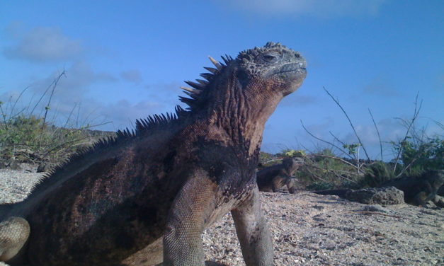 GALAPAGOS: Las Islas Encantadas – Nature Hopping 2021
