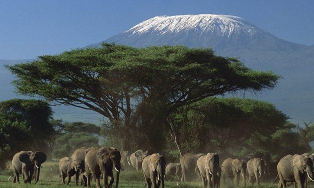 KENYA-TANZANIA: Amboseli e i Parchi del Nord della Tanzania