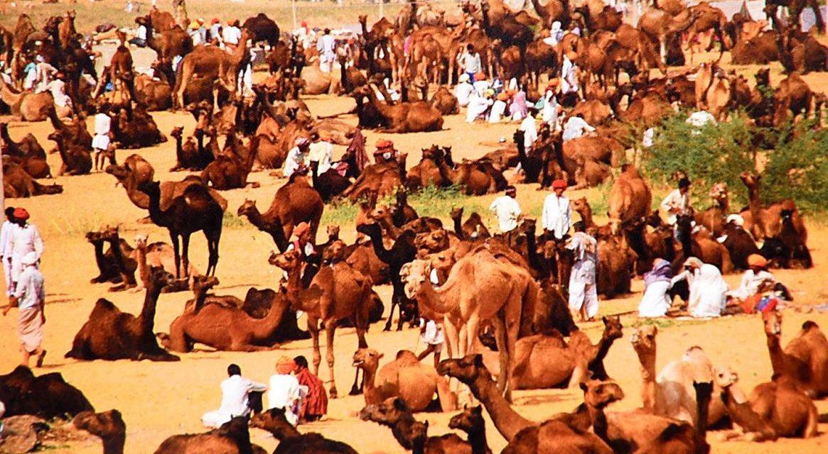 INDIA: Rajasthan – Fiera di Pushkar