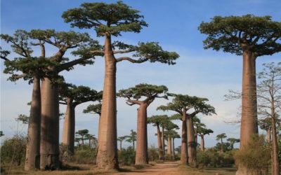 MADAGASCAR: Madagascar sud