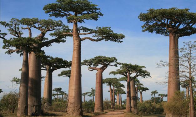 TABELLA PARTENZE GARANTITE e PRIVATE- AFRICA